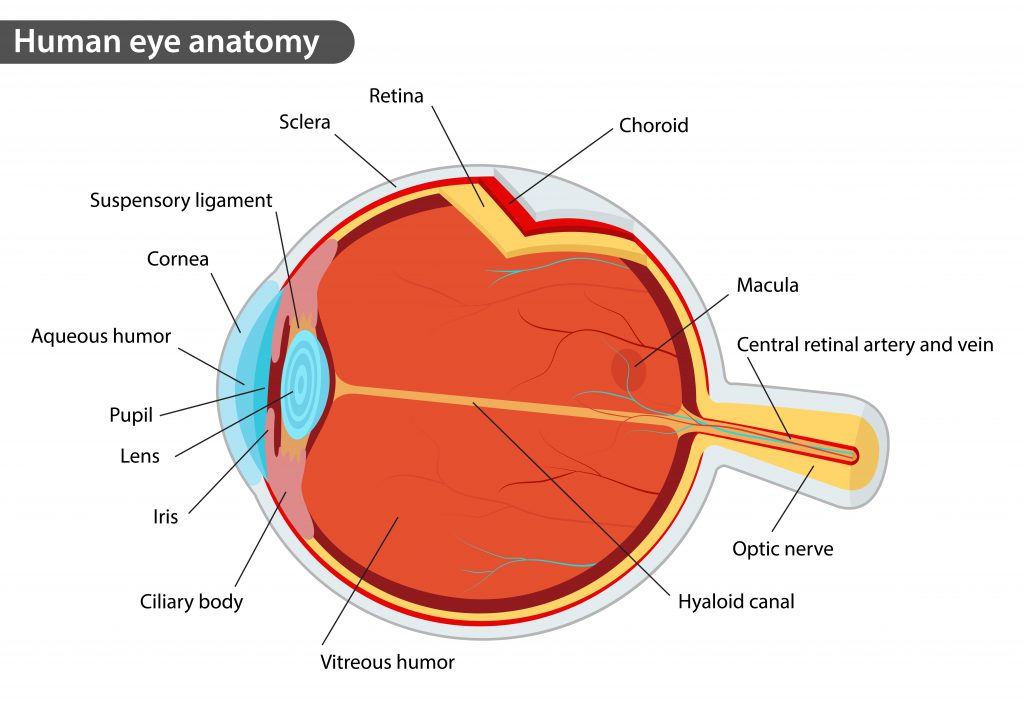 Retina Exam Farmington Retina Specialist Glastonbury