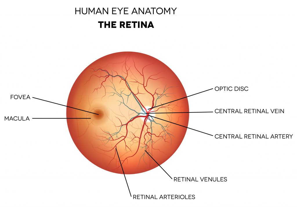 Retina Farmington | Eye Anatomy Glastonbury, Connecticut